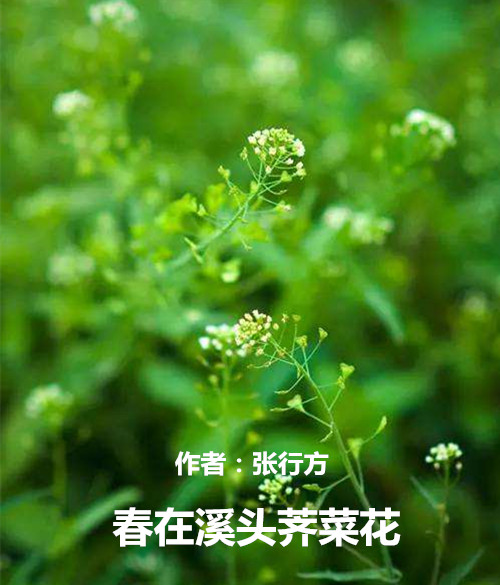 /upload/image/20200310/1583812335540355.jpeg